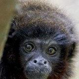 Shaldon Wildlife Trust Zoo